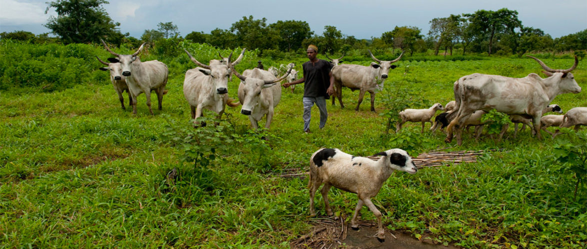 KACRAN Calls On Southern State Govts To Reconsider Ban On Open Grazing