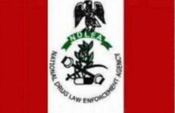 NDLEA Arrests 249 Suspects In Anambra, Seizes Kilograms Of Drugs