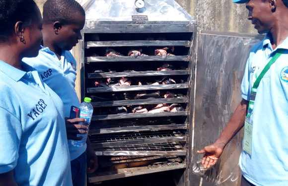 Job Creation: Delta Govt Trains, Sets Up 12 Youths in Fish Processing