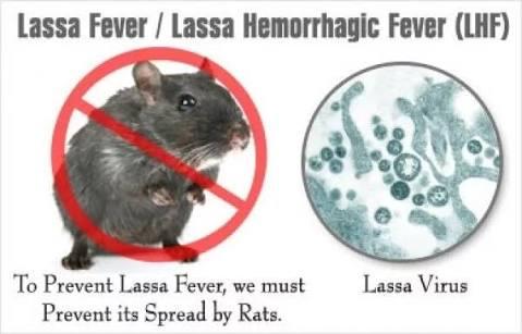 Lassa Fever: 4 Cases Reported In Borno  **One Patient Dead